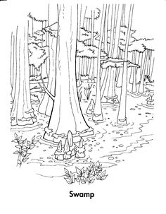 Forest Habitat Coloring Pages