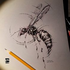 Wasp sketch, time lapse video is up my YouTube channel. Link for the video is at the top...