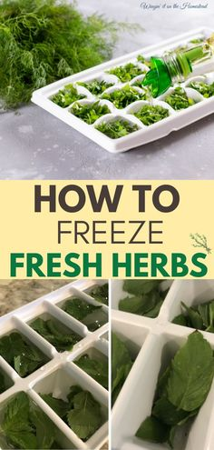 HAVE FRESH HERBS ALL YEAR ROUND! Preserve your herbs from your garden this year with this quick guide on how to freeze your fresh herbs from @wingingitonthehomestead! There are many ways to preserve herbs so that you can enjoy fresh herb flavors all year round. Drying herbs is not the only method for preservation. Freezing your herbs is so easy-discover how. THEN DOWNLOAD YOUR FREE DIY AND RECIPES GUIDE FILLED WITH OVER 10 EASY DIY RECIPES! Grab it now: #winginitonthehomestead #herbgarden Vegetable Garden For Beginners, Garden Tips, Vegetable Gardening, Garden Ideas, Freezing Fresh Herbs, Growing Seeds, Homemade Sauce, Grow Your Own Food, Preserving Food