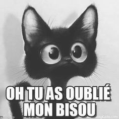 DONT FORGET MY KISSSSSS #kiss #love #sweet #cute #cat #bisous #black #instadaily #instamood #instalike #instalove #instafollow #follow #followus #follow4follow #followforfollow #like #likeforlike #like4like #picofthenight #goodnight #sweet #dreams Minion Humour, Jokes Quotes, Memes, 100 Euro, Messages For Him, Pokemon, Hilarious, Funny, Worlds Of Fun