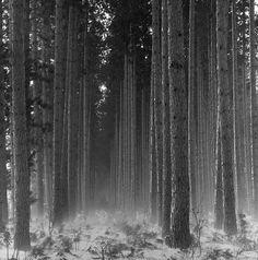 Hiawatha National Forest, Upper Peninsula, Michigan
