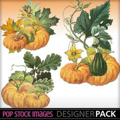 Fall Themed Element Clusters - Pumpkins - Set of 3 PNGS  - Seasonal Clipart - Digital Art Scrapbooking - Journal Clipart - Cardmaking Images