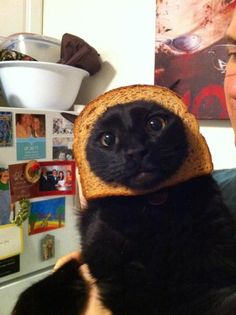 Stupid Things Which Make Me Laugh #7259865 - Breaded Cats