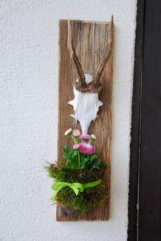 Holzbrett mit Rehgeweih - a little bit nature at home :)