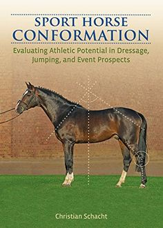 The way a horse is physically built, his conformation, tells a lot about the riding sport or discipline for which he is best suited. With a well-trained eye, you can see his strengths and his weakness