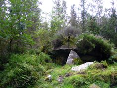Collapsing portal tomb with nature creating a sort of barrow over time. This heather covered dolmen I call the Fairy Dolmen and can be found in the Cavan Burren Forest. DO take an offering.