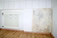 Avoiding Mold in Your Home