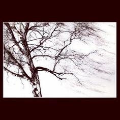 alles verschwommen - verkommen. #tree #art #melancholia #verschwommen #verkommen #nature