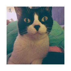 Winnie Katze | Pawshake
