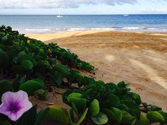 Maui Hawaii photo by Lynnda