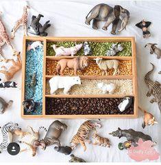 Cutlery Tray Sensory Play Small World 🐯🐻🐨🐵🐷 Sensory Table, Sensory Bins, Sensory Activities, Infant Activities, Sensory Play, Play Based Learning, Learning Toys, Montessori Science, Tot School
