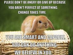 If inspirational bunny believes in you I believe in you than you should believe in you Easter Bunny Pictures, Cute Easter Bunny, Bunny Images, Weight Loss Secrets, Best Weight Loss, Motivation Inspiration, Fitness Inspiration, Life Inspiration, Bunny Quotes