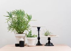 """Things you keep around your studio or home for inspiration: """"Succulent plants…"""