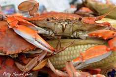 Crisfield Maryland News and Photography: Maryland 2012 Crab Season begins April 1, 2012