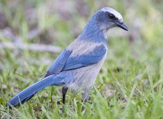 Bird Conservation: A History