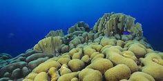 Afbeeldingsresultaat voor koraalrif indonesie
