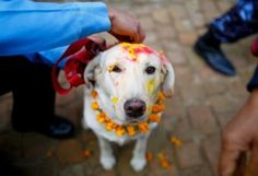 Festividades para animais de estimação por todo mundo | meusanimais.com.br