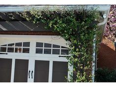 Carriage Doors | Garage Pergola Vine