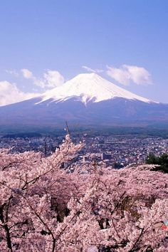 Japan,Mt. Fuji and a cherry tree