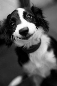 Smiling dog by Benjamin Liew. Love this photo - such a pretty dog and happy face!