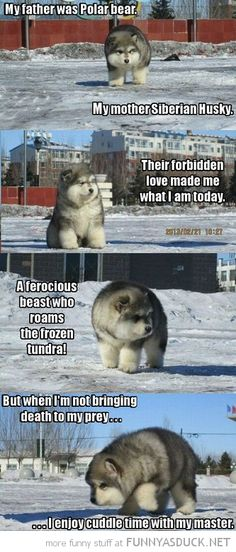 Is it ferocious like a polar bear or cuddly like a husky?