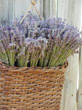 Turkey Creek Lavender