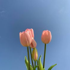 Most up-to-date Images Tulip aesthetic Tips Prolonged dwell the tulip ! Grow this kind of brightly colored jewel cell phone . a pleasant demonstrate dur Flower Aesthetic, Blue Aesthetic, Aesthetic Photo, Aesthetic Pictures, My Flower, Beautiful Flowers, Plants Are Friends, No Rain, Wall Collage
