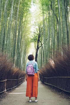 Three Super Easy and Amazing Day Trips to Take From Kyoto