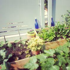 in my garden <3 #solar #water #hoponopono #blue #bottle #cobalt #mantra #mandala