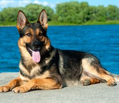 The 10 Spunkiest Dog Breeds
