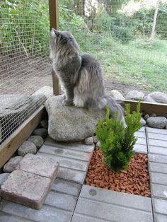 Inside a cat enclosure,great decorating idea!