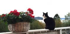 Our sweetheart Rambo joining us on the terrace :) In my garden Margeritten by Inger Johanne 9-12-15 :)