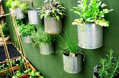 Nine steel coffee cans hanging spaced out on a green wall.  Each is full of soil and growing herbs or small plants.