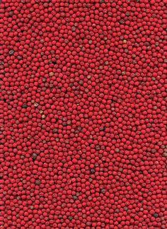 Ilex reticulata berries  by horticultural art