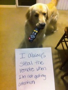 I always steal the remote when I'm not getting attention.