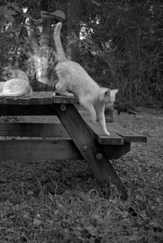 Beautifully printed on Matt art paper, Cats features fourteen never before published photographs of cats and kittens making themselves at home in Athens, Georgia.