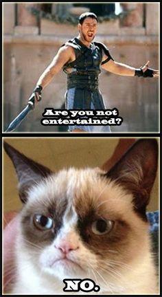 Grumpy Cat | mega post Grumpy Cat o Gato Gruñon - Taringa!