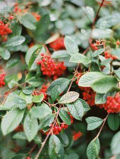 red berries | photo jessica rose