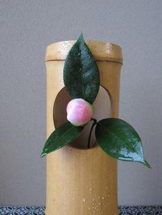 ご無沙汰をしております。我が家の、西王母椿が、今年も神無月の半ばより咲はじめ、地植えは栄養抜群と、霜月に入ると、咲き乱れる程です。花 : 西王母椿花入 : 竹…