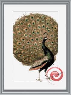 Peacock Cross Stitch Pattern, Instant Download PDF
