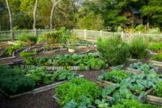 Easy Vegetable Home Gardening Ideas | EASY DIY and CRAFTS