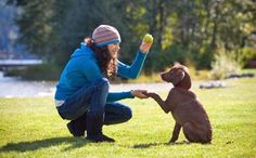 Simple Ways To Train Your Dog | Train Your Dog Today