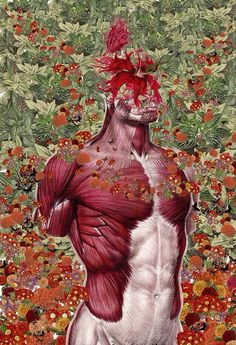 Anatomical Collages by Travis Bedel mixed media collage anatomy Art Du Collage, Collage Artists, Art And Illustration, Vintage Illustrations, Travis Bedel, Arte Com Grey's Anatomy, Human Anatomy Art, Colossal Art, Contemporary Art