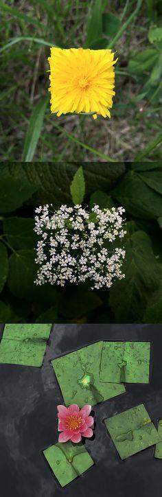 Bit Leaves: Square Flowers and Plants by Baku Maeda