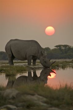 Rhino - save these magnificent creatures http://www.avaaz.org/en/save_rhinos/