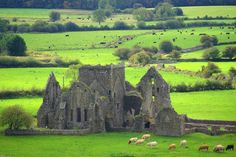 Hore Abbey (also Hoare Abbey, sometimes known as St.Mary's) is a ruined Cistercian monastery near the Rock of Cashel, County Tipperary, Republic of Ireland.