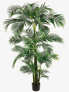 The magic of the  holid~~ 1  TP147-GR   7' Tropical Kentia Palm Tree in Plastic Pot Green