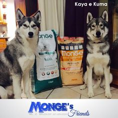 Kaya e Kuma #Mongesfriends