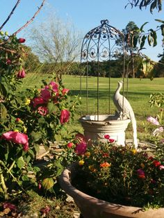 My mom;s lovely garden - Moss rose and fountain in Oklahoma