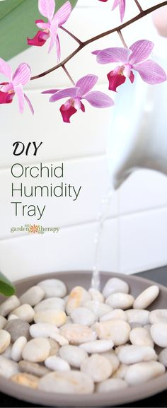 Keep Blooms Beautiful with a DIY Orchid Humidity Tray. This DIY orchid humidity tray will help the stunning blooms last longer and keep your plants much happier. And it can be used for a whole host of humidity-loving plants as well. Orchids Garden, Orchid Plants, Air Plants, Garden Plants, Indoor Plants, House Plants, Potted Plants, Indoor Orchids, Indoor Cactus